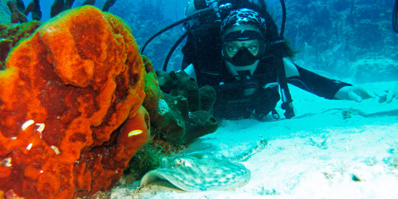Buceo Catalina
