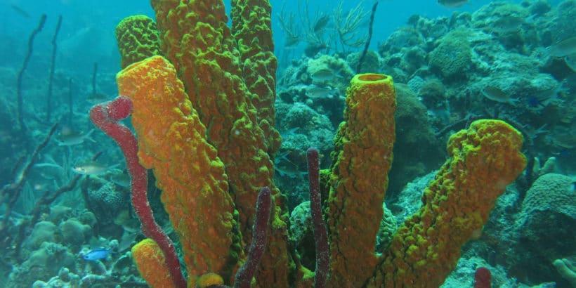 Buceo Isla Saona